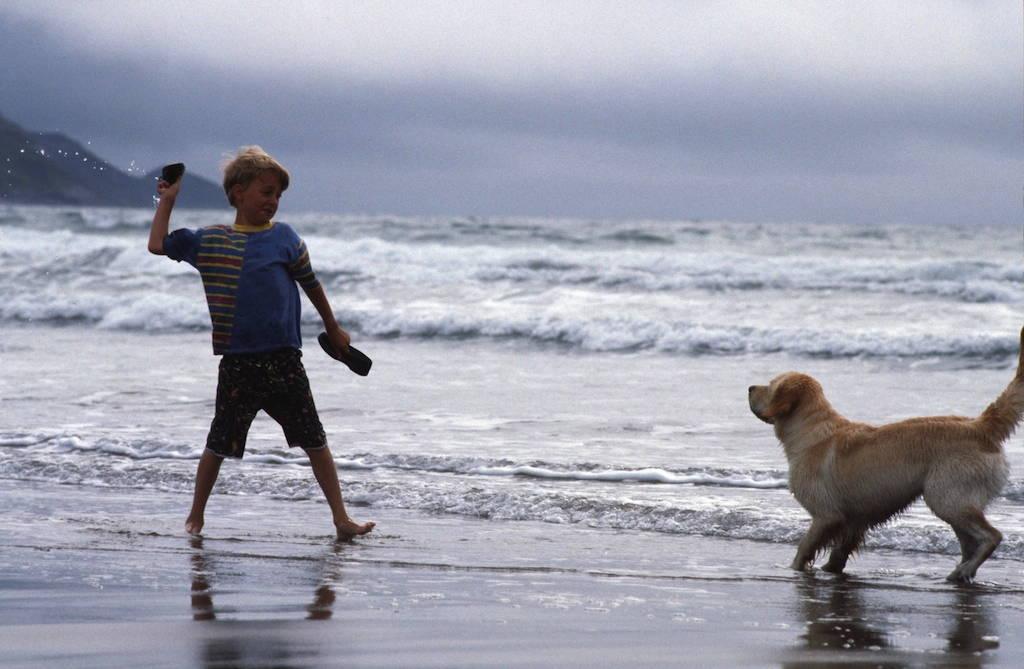 Dog Walking Summerleaze Beach